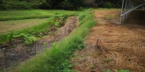 A草刈り前2.jpg