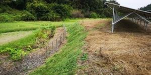 A草刈り後2.jpg