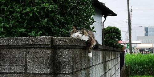 ネコ.jpg