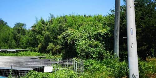 パッと見ジャングル.jpg