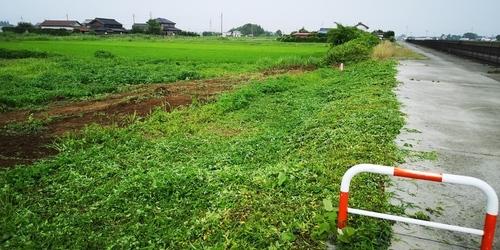 用水路敷地草刈り.jpg