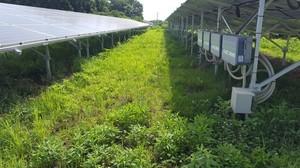 草刈り前1.jpg