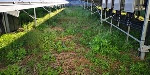 草刈り前2.jpg