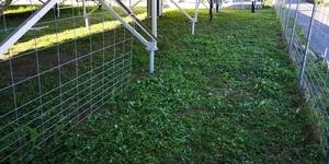 草刈り後1.jpg